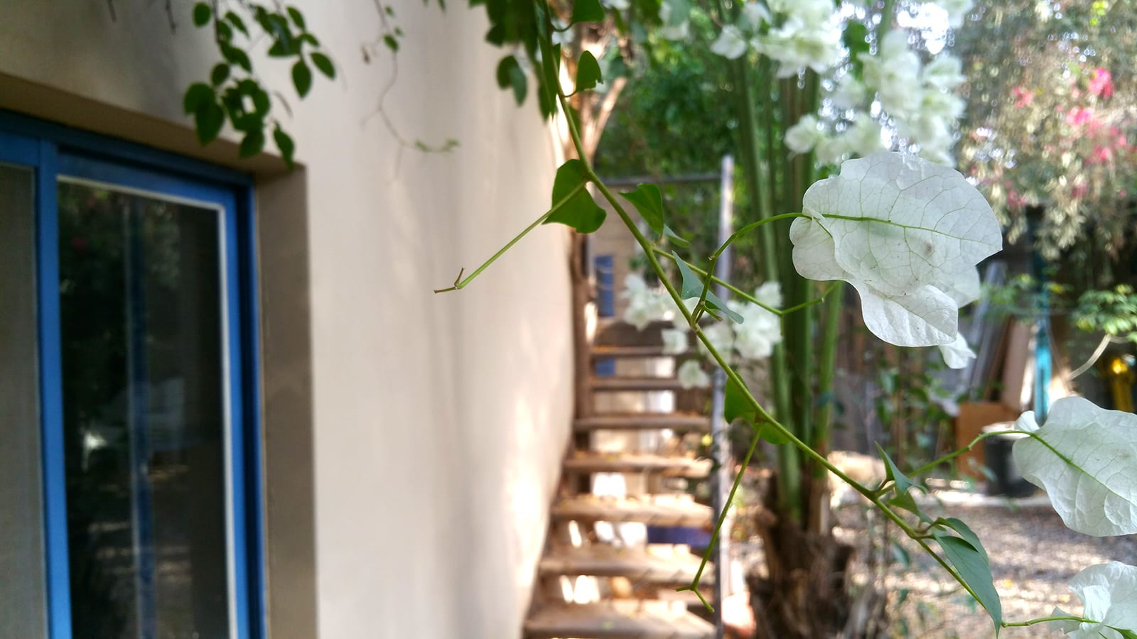 מדרגות חיצוניות בחצר לקומת המגורים היכולה לשמש יחידה נפרדת בבית למכירה בעין ורד